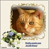 Tendres pensées pour toi jolie Poussy (Figareine- Michelle) Tags: chat bestofcats catmoments vg~catsgallery kittyschoice coth5 fabuleuse alittlebeauty