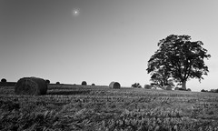 The Moons Last Call (Alistair Prentice.) Tags: autumn ireland bw irish white black tree field hail landscape prentice northern bail greyscale armagh portadown