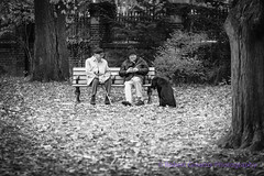 Morning in the Park (Fulcrum imaging Robert Greatrix) Tags: park street old autumn friends blackandwhite dog pet white black men fall public senior monochrome cane bench cityscape seasons time sony relaxing meeting pals chilling aged parkbench chatting relaxed retired comrades seniors retirement urbanlandscape oldmen streetshot faithful copyrighted chitchat leaces comraderie dayinthepark robertgreatrixphotography