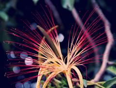 flower (victorcamilo) Tags: brazil plant flower planta nature colors brasil cores flora natureza ngc flor victorcamilo