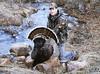New Mexico Elk Hunt 74