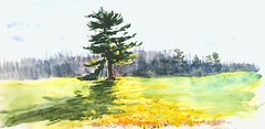 Blacklit White Pine with a Broken Limb (Artist Naturalist-Mike Sherman) Tags: november art rural landscape michigan farm transparent onlocation notphotography midwestern watercolorpainting pleinaire midmichigan danielsmithwatercolors
