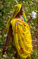 Donna Kholi Explore (livia.com) Tags: india donna giallo cotton tribe gujarat trib cotone kholi