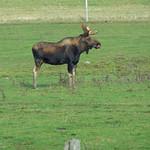 moose & farm 019 thumbnail