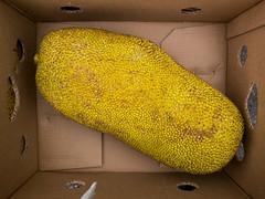 Winnick_Food_Breadfruit