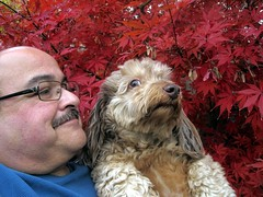 Profiles (Tobyotter) Tags: dog chien pet me frank profile hound canine tony dachshund perro hund wienerdog dackel teckel k9 doxie sausagedog aplaceforportraits pointyfaceddog