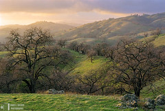 The Enchanted Forest (James L. Snyder) Tags: california ranch park trees winter sunset usa foothills painterly mountains 2004 grass horizontal misty fog clouds rural forest evening haze quercus rocks soft glow afternoon veiled cloudy native bare country foggy sanjose atmosphere hills boulders valley cumulus bayarea late glowing verdant serene february hazy deciduous hillside delicate oaks dreamlike grassland puffy magical idyllic luminous radiant rolling gnarled enchanted mellow backlighting humid dormant savanna beckoning santaclaracounty countypark magiclight vaporous diablorange josephgrantcountypark hallsvalley artistslight treesonhills ranchocañadadepala