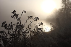 Fog on the Thames 4 (717Images) Tags: winter mist cold silhouette fog thames sunrise river dawn moody riverside foggy tranquility bank mystical oxfordshire abingdon waterway bankside