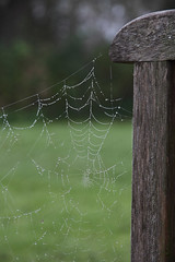 Hanging By a Thread! (Jonny Hirons) Tags: uk greatbritain morning autumn fall nature wet outdoors grey spider dewdrops web yorkshire overcast fresh cobweb delicate fragile dull northyorkshire damp freshness dank fragility hangingbyathread clingingon epitomizesautumn epitomisesautumn theepitomyofautumn