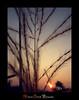 its autumn (Animesh2000) Tags: ocean road blue light sunset red sea orange cloud india flower macro reflection art home nature floral beautiful leaves night photography mono pattern artistic dusk kerala photograph calicut animesh debnath