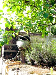watering can (leverkuss) Tags: green nature wall germany garden dresden wateringcan ewer wateringpot
