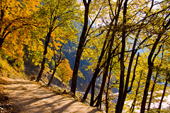 Autumn Leaves (Black-Z-ro [100,000+ views]) Tags: autumn pakistan leaves river zoya valley kashmir ahmad karachi ahmed sindh kel jammu islamabad sharada azad neelum keran khizer khizar blackzero irfanahmed76
