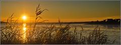 Backlit Grass (Ken Came) Tags: pictures sunset grass dorset backlit 112 mudeford 2012