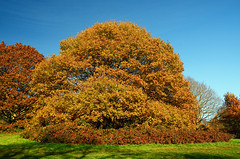Three Weeks Later (Gaz-zee-boh) Tags: autumn tree london hampsteadheath municipalpark n6 londonist almostanything bbcautumnwatch nikond7000 publicparkk