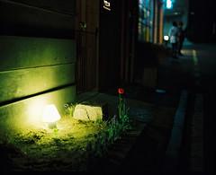 ... (june1777) Tags: street light flower night pentax kodak bokeh snap seoul portra 800 67 105mm f24 samcheongdong pentax67