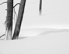 Yellowstone snow trees shadows (glennrossimages) Tags: trees snow shadows yellowstone wyoming wy