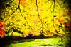 Grand Finale (moaan) Tags: life leica november color digital 50mm dof bokeh f10 momiji japanesemaple kobe utata noctilux dairy tinted 2012 m9 tinged colorsofautumn inlife leicanoctilux50mmf10 神戸市立森林植物園 長谷池 leicam9 futatabipark autumndairy