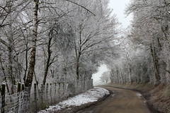 Country Road (gripspix (BUY BUY! OFF NOW!)) Tags: nature frost hoarfrost natur rime raureif countryroad 20121201 landstrschen