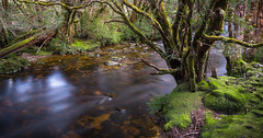 ...continuum (thomp88(chasethemoments)) Tags: mountain green forest canon river flow moss long exposure walk tasmania 5d tas cradle enchant nd400 5dm3