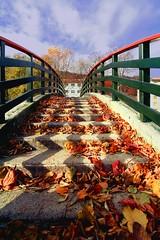Si sta come d'autunno sugli alberi le foglie (meghimeg) Tags: bridge autumn colors leaves foglie ponte explore autunno colori 2012 cairomontenotte