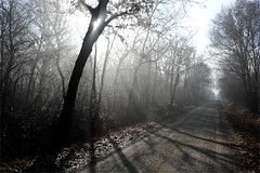 trees in the mist (matteo | sartori) Tags: trees mist fog alberi nebbia mandria