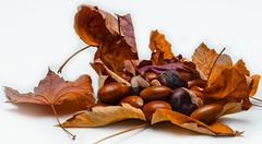 Autumn (Duka Istvan) Tags: autumn white nuts acorn fir chestnut glans conker autumntime filber izolated