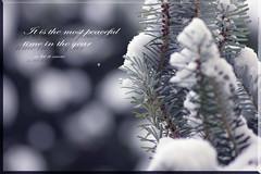 time of the year 1 (peter pirker) Tags: schnee winter snow canon austria österreich kärnten carinthia peter makro tanne villach peterfoto eos550d peterpirker
