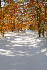 Snowy trail (Ruled by Neptune 64) Tags: trees winter shadow snow tree canon shadows snowy trail dslr d30 canond30 snowytrail