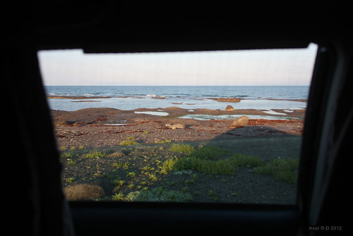 Morning view from the car - Newfoundland