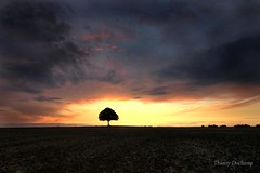 Black and light (photosenvrac) Tags: light cloud tree landscape lumire chestnut nuage campaign campagne arbre beauce marronnier thierryduchamp