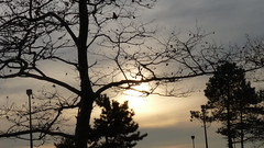 P1220033 (aprm718_3) Tags: nyc trees sunset sky brooklyn clouds campus landscape kingsborough amateurphotography anthonymcnallyphotography aprm718