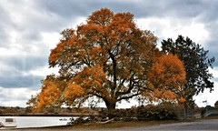 Autumn-Tree-River