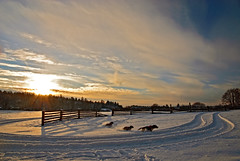 Winter fun (dellafels) Tags: sunset snow dogs till terry abi entlebucher dellafelspic
