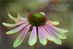 Follow your dream (bonnie5378) Tags: coneflower echinacea greenenvy july2016 textured cloth naturescarousel ngc