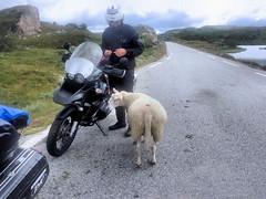 Local resident say hello. (topzdk) Tags: norway mc motorcycle honda bmw 2016 summer austagder vestagder nature