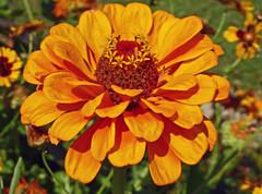 2016.08.15.008 PARIS - Parc de Bagatelle (alainmichot93 (Bonjour  tous)) Tags: 2016 france ledefrance seine paris boisdeboulogne parcdebagatelle parc jardin fleur flower