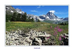 Valle d'Aosta (10) (Jambo Jambo) Tags: cervino valdaosta aosta alpi alpioccidentali alps fiori flowers montagne mountains panorama landscape sonydscrx100 jambojambo