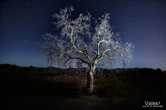 nostalgia (Valero-Xixona) Tags: nocturnas