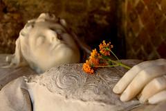 Sleeping Beauty - II (Cristina Seguiti) Tags: statua statue bella belle donna woman femme addormentata sleeping beauty tomb flower yellow giallo fiori fiorellini roma rome cemetery cimitero canon