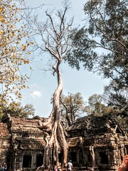 Ancient city - Angkor Wat (cattan2011) Tags: architecture traveltuesday travelblogger travel nature city tree landscape angkorwat phnompenh cambodia ancientcity