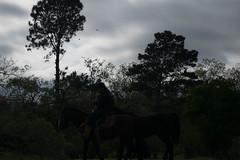 DSC_5226 (neyde zys) Tags: bandadabrigada brigadamilitar desfilefarroupilha gauchos indumentaria prendas tradicao