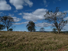 (IgorCamacho) Tags: sky cu cielo trees rvores campo field nuvens nubes clouds inverno winter paran southern brazil brasil suldobrasil natureza nature