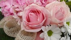(wunderpar aka the_real_life) Tags: straus blumen bunt pink bltenblatt blten bltter blatt plants pflanze flower flora hell wunderpar handy samsunggalaxysmartphone6 rose