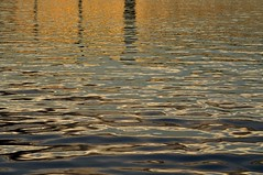 Ripples in the Forth (robert55012) Tags: forth queensferry scotland