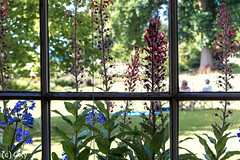 Killerton House / Cornwall (konstantin oxy) Tags: window fenster blumen flowers