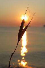 IMG_0089x (gzammarchi) Tags: italia paesaggio natura mare ravenna lidoadriano alba sole erbasecca pianta riflesso
