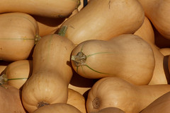 Butternut (2) (Nataraj Metz) Tags: thanksgiving park autumn food naturaleza fall nature closeup automne germany pumpkin deutschland healthy essen europa europe eating patterns pumpkins herbst natur harvest natura fresh health crop environment otoo cosecha butternutsquash diet muster deu erntefest ludwigsburg nahaufnahme sant erntedank erntedankfest pumpkinfestival krbisse nutrition krbis ernte umwelt harvesting frisch wintersquash moisson calabazas harvestfestival gesundheit badenwrttemberg frico gesund cucurbitapepo cucurbita sanidad courge nutricin blhendesbarock ernhrung krbisausstellung  cobranza pumpkinexhibition butternuss fiestadelacosecha ftedelarcolte moissonage
