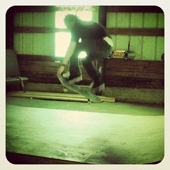 "#ollie #nosegrab #skateboard #skateboarding • <a style=""font-size:0.8em;"" href=""http://www.flickr.com/photos/99295536@N00/8173123633/"" target=""_blank"">View on Flickr</a>"