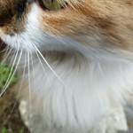 """Cat at St. Paul memorial museum <a style=""""margin-left:10px; font-size:0.8em;"""" href=""""http://www.flickr.com/photos/59134591@N00/8175846536/"""" target=""""_blank"""">@flickr</a>"""