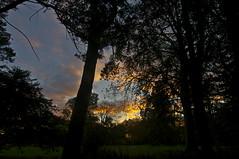 739-50L (Lozarithm) Tags: westonbirt gloucs sunset kx 1224 justpentax pentax zoom